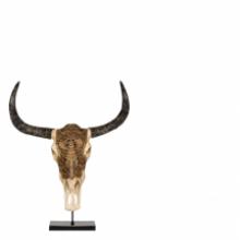 Bull Skull Carved